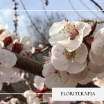floriterapia - -servizi-LunAnima